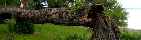 Storm Damage & Emergency Tree Services